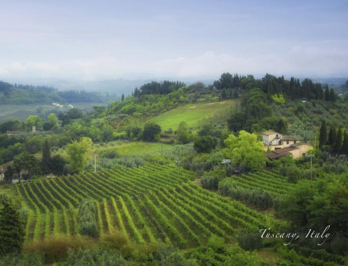 Tuscany Vineyard 1